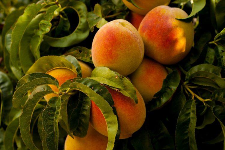 Best Fruity Colognes for Men