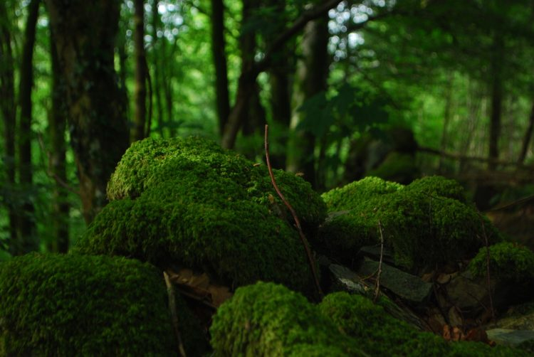 warm, woody, mossy forest