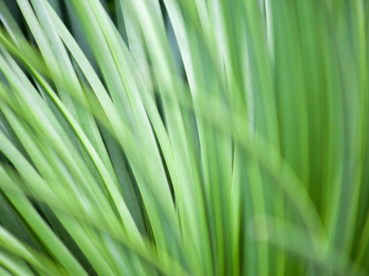 The Smell of Nature: Best Green Fragrances for Men