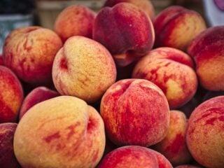 fruity colognes for men