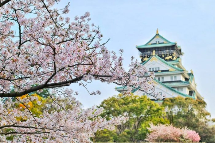 Japanese scene with blossoms