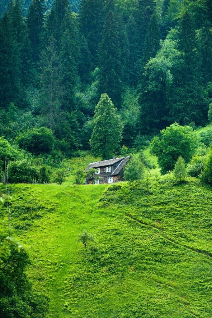 green-nature-aramis