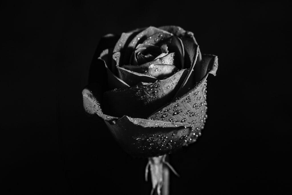 oud-ispahan-rose